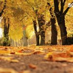 Autumn Walks fit perfectly into an off-season holiday