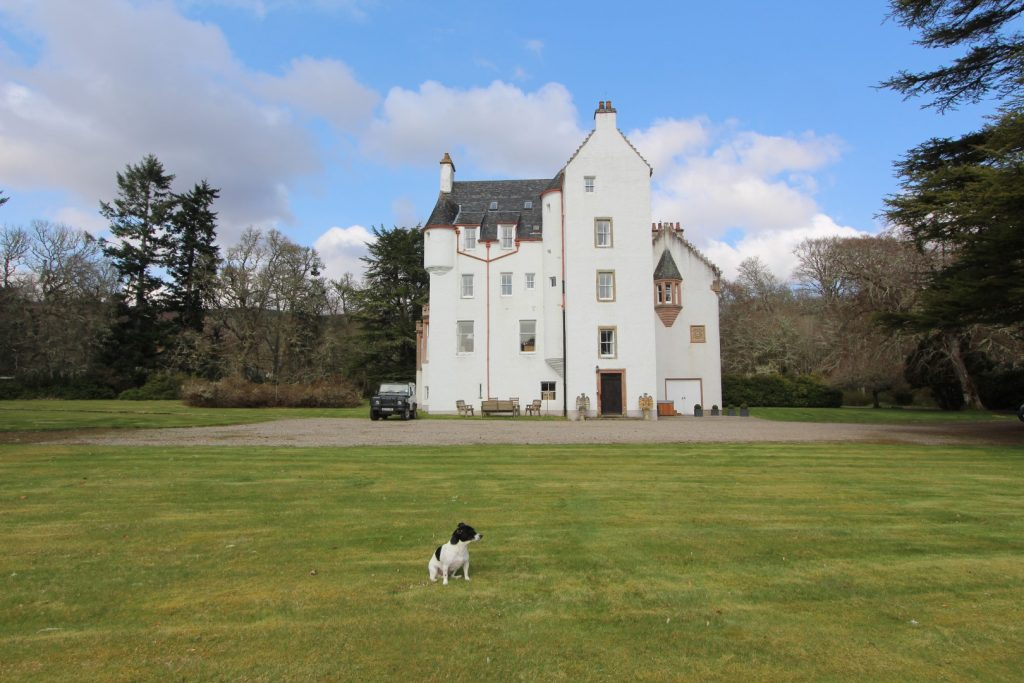 Jack Russell dog sitting on the lawn with highland castle in the background.