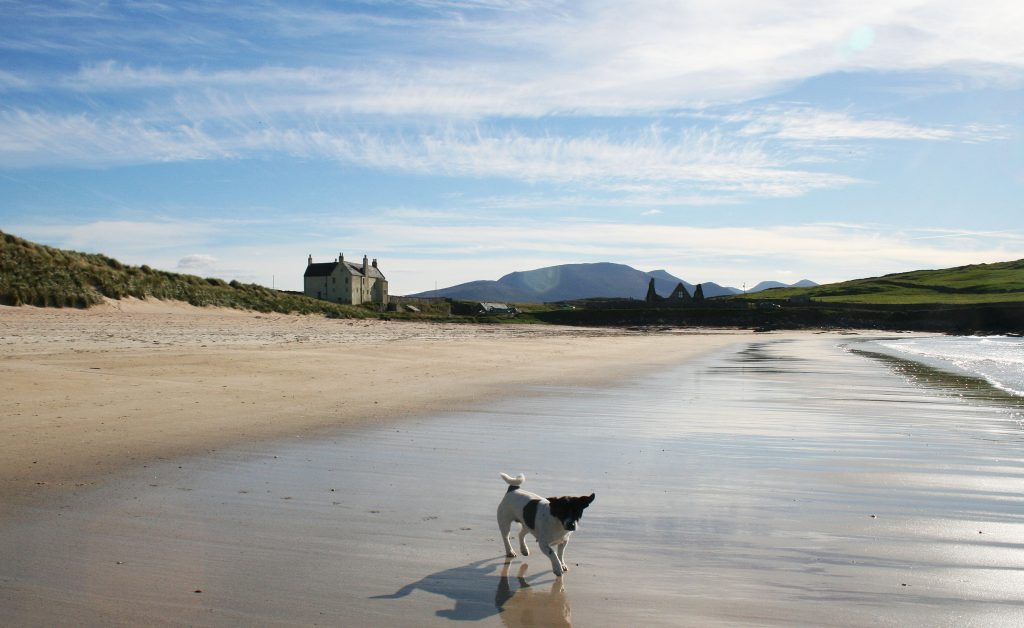 Jack Russell dog on an expansive empty beach with large holiday home in the distance overlooking the sea